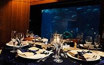 Living Seas Salon